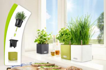Jak fungují samozavlažovací truhlíky a co v nich můžete pěstovat?
