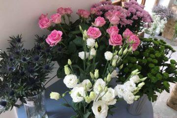 Vyzdobte svůj interiér zajímavou květinou