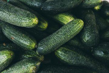 Jak na semenaření okurek?