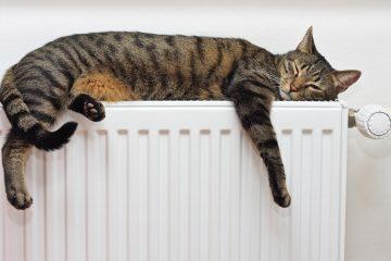 Dopřejte vaší kočce kvalitní stravu. Existuje dokonce krmivo pro sterilizované kočky