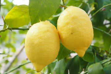 Citron aneb poznejte jeho léčivé účinky
