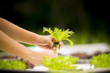 Hydroponie aneb jak pěstovat zeleninu i bez hlíny?
